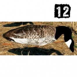 12 Aéro-blette bernache mangeuse