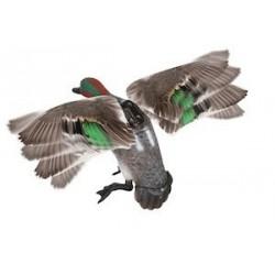 Sarcelle à ailes battantes