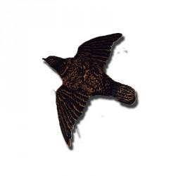 Etourneau ailes déployées