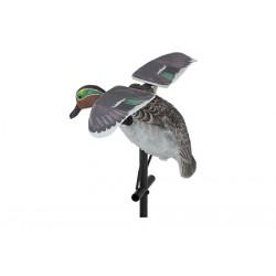Sarcelle à ailes tournantes