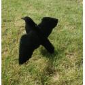 Corbeau à la pose / Défensif