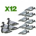Pack 12 aéro-blettes pigeons