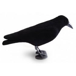 corbeau floqué